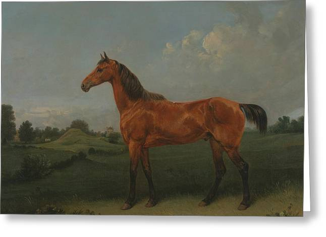 A Bay Horse In A Field Greeting Card by Edmund Bristow
