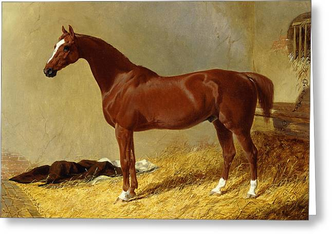 A Bay Racehorse In A Stall, 1843 Greeting Card
