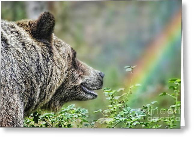 A Bear Watching The Sun Return Greeting Card by Jim Fitzpatrick