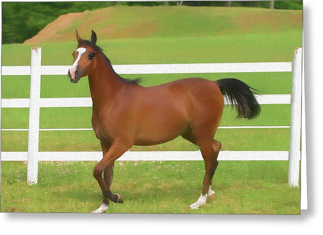 A Beautiful Arabian Filly In The Pasture. Greeting Card