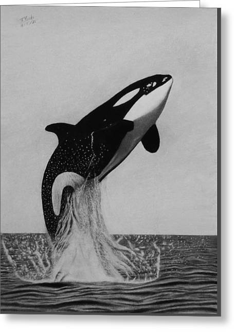 Orca - The Joy Of Freedom Greeting Card