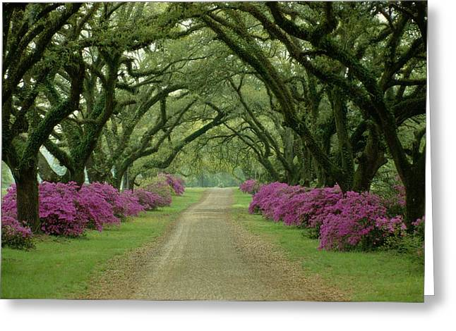 A Beautiful Driveway Lined With Trees Greeting Card