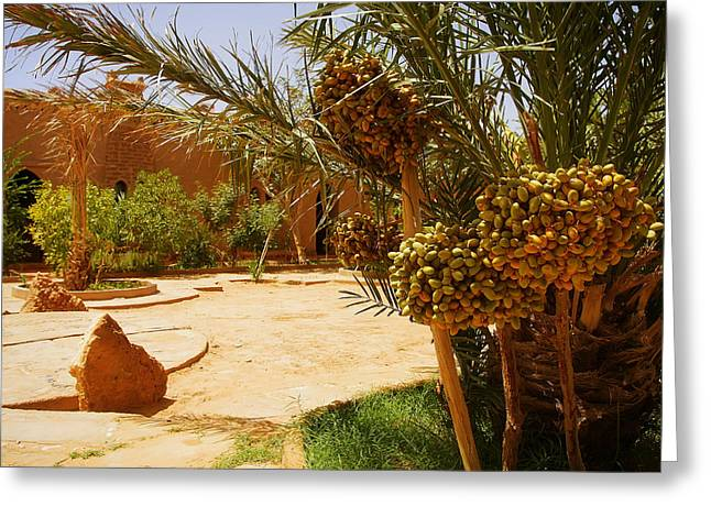 A Beautiful Moroccan Garden With Date Palm Trees With Riping Dat Greeting Card
