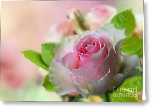 A Beautiful Rose Greeting Card