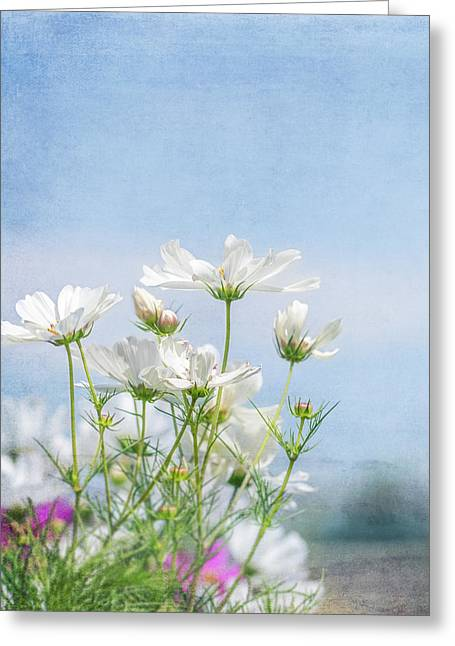 A Beautiful Summer Day Greeting Card