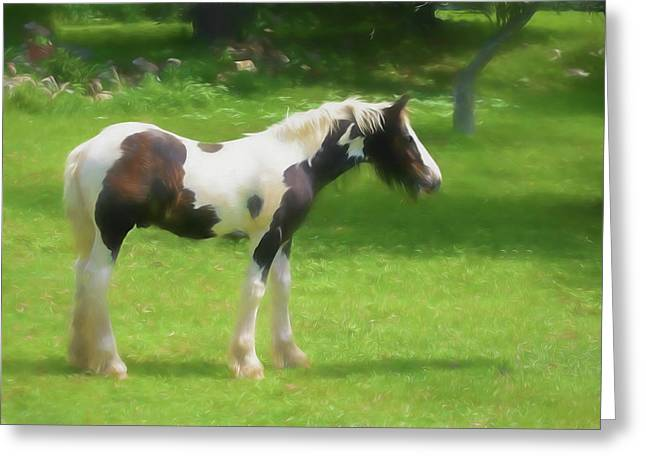 A Beautiful Young Gypsy Vanner Standing In The Pasture Greeting Card