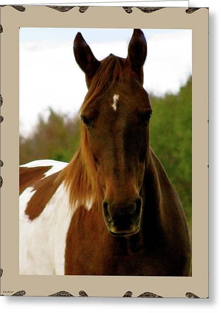 Pastureland Greeting Cards - A Beauty Greeting Card by Debra     Vatalaro