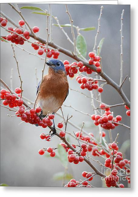 A Berry Good Morning Greeting Card by Amy Porter