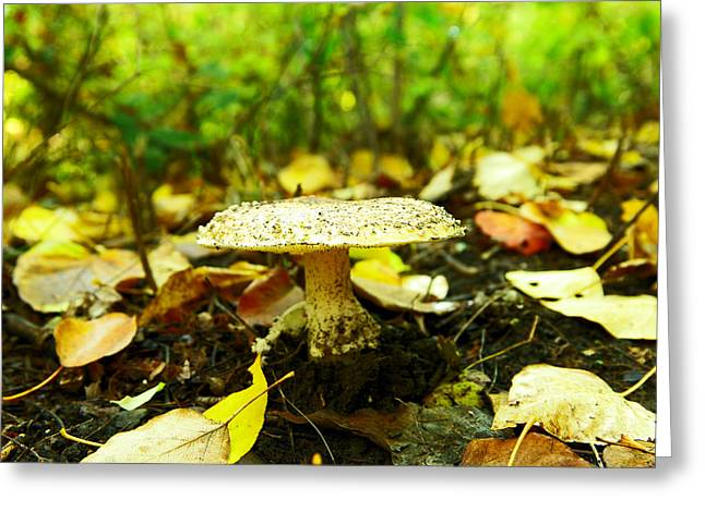 A Big Mushroom Greeting Card