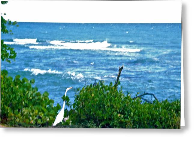 A Bird And The Sea Greeting Card