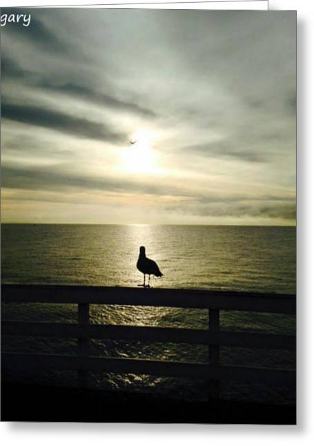 A Bird In Paradise Greeting Card