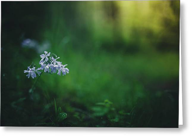 Greeting Card featuring the photograph A Bit Of Forest Magic by Shane Holsclaw