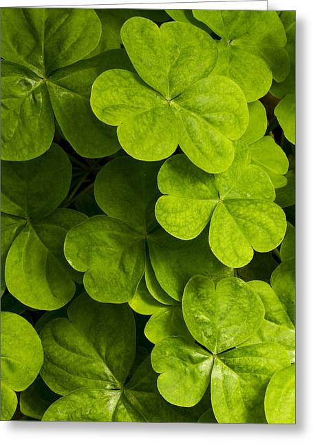 A Bit Of Green Greeting Card