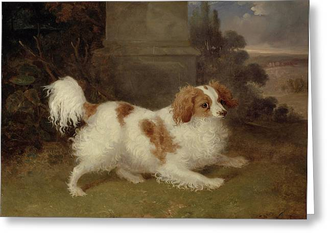 A Blenheim Spaniel Greeting Card by William Webb
