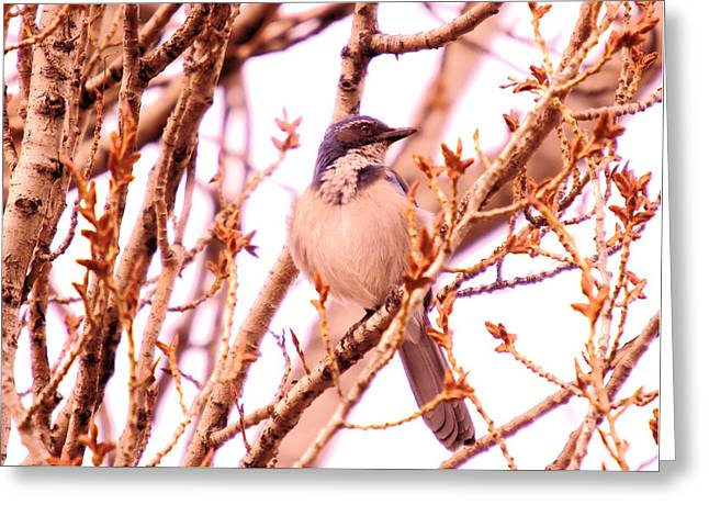 A Blue Bird Greeting Card by Jeff Swan