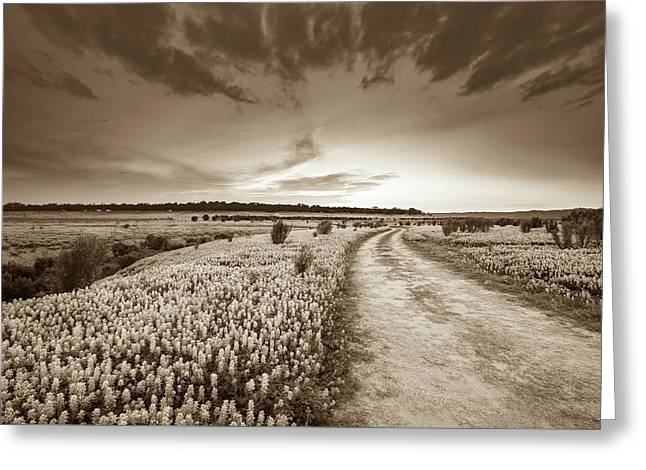 A Bluebonnet Field Under Evening Sky - Sepia - Texas Greeting Card