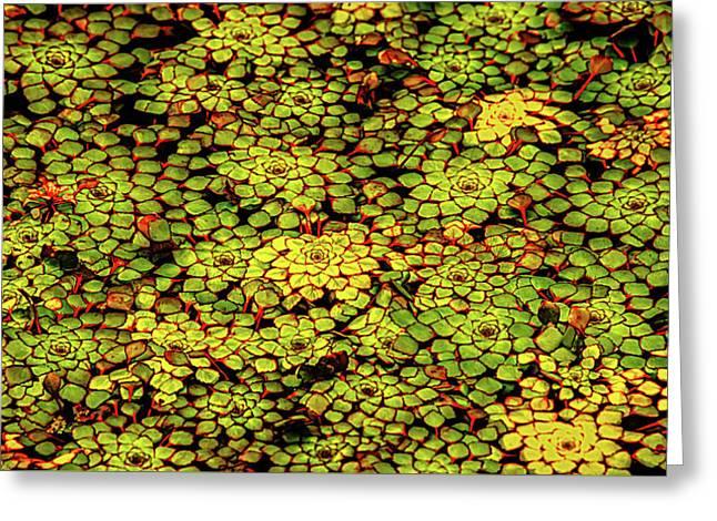 A Botanical Mosaic Greeting Card