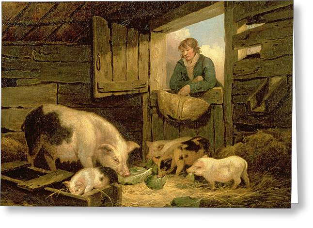 A Boy Looking Into A Pig Sty Greeting Card