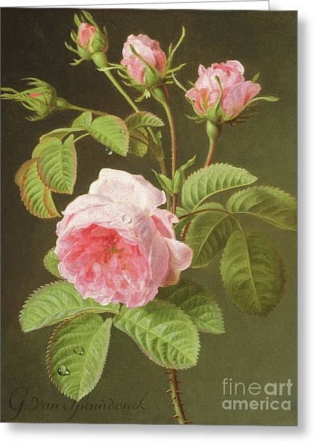 A Branch Of Roses Greeting Card