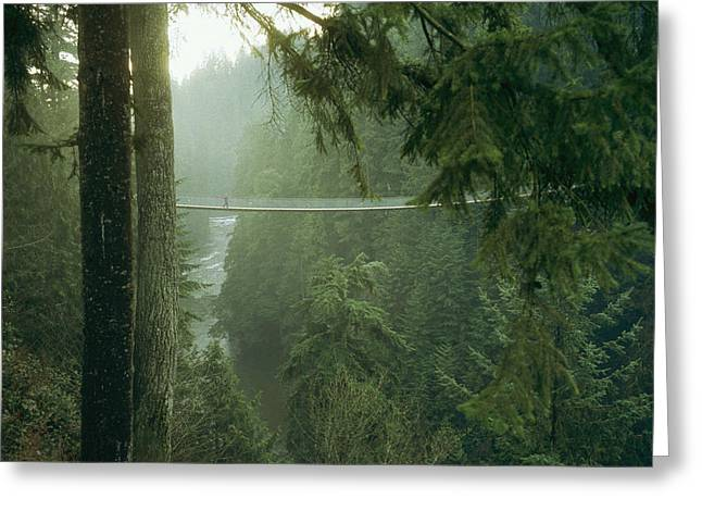 A Bridge Spans A Salmon Spawning River Greeting Card by Taylor S. Kennedy