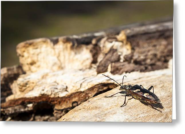 Greeting Card featuring the photograph A Bugs Life by Stewart Scott