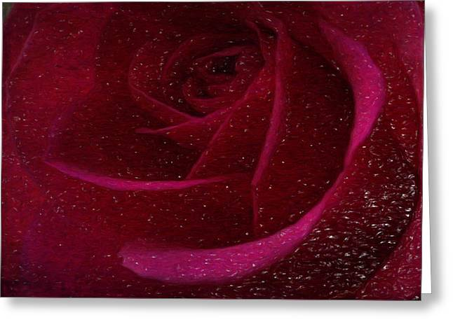 A Burgundy Rose In Snow Greeting Card by Sarah Vernon