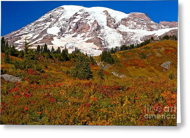 A Burst Of Color At Paradise Greeting Card by Adam Jewell