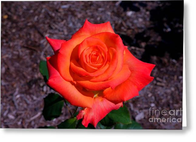 Greeting Card featuring the photograph A Burst Of Sunny Beauty. by David Bishop
