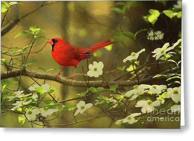 A Cardinal And His Dogwood Greeting Card