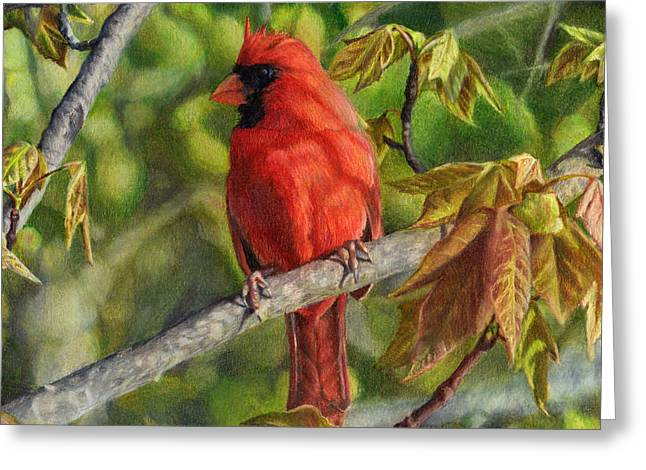 A Cardinal Named Carl Greeting Card