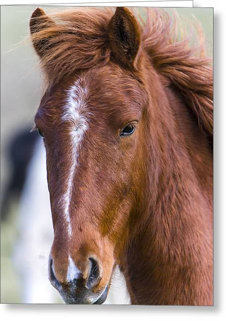 A Chestnut Horse Portrait Greeting Card