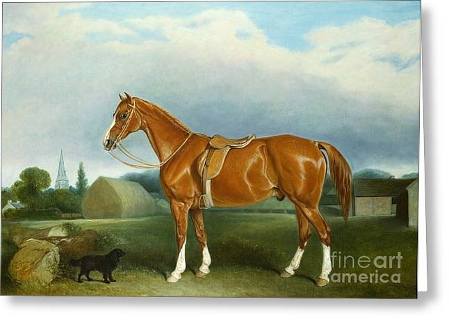 A Chestnut Hunter And A Spaniel By Farm Buildings  Greeting Card