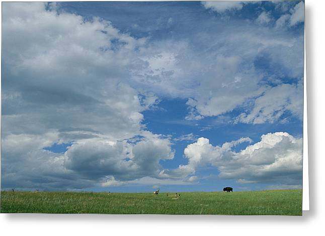 A Cloud-filled Sky Over Pronghorns Greeting Card by Annie Griffiths