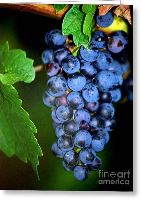 Clusters Of Grapes Greeting Cards - A Cluster Of Cab Greeting Card by Laurel Sherman
