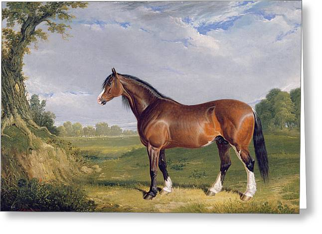 1820 Greeting Cards - A Clydesdale Stallion Greeting Card by John Frederick Herring Snr