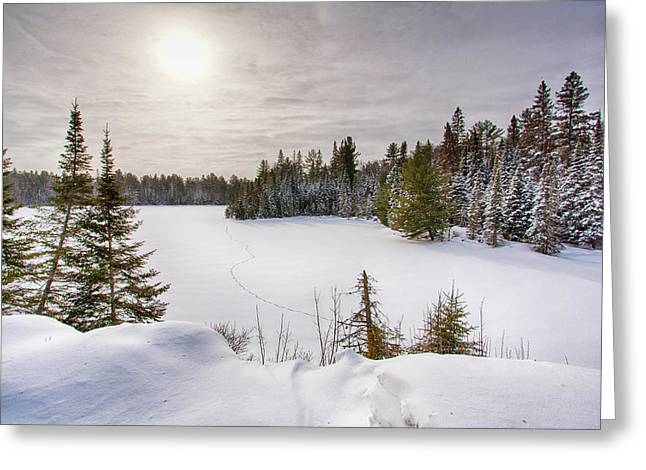 A Cold Algonquin Winters Days  Greeting Card