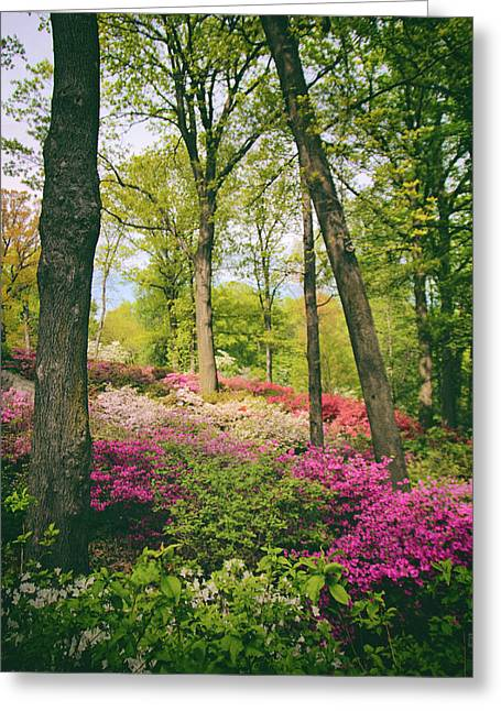 A Colorful Hillside Greeting Card