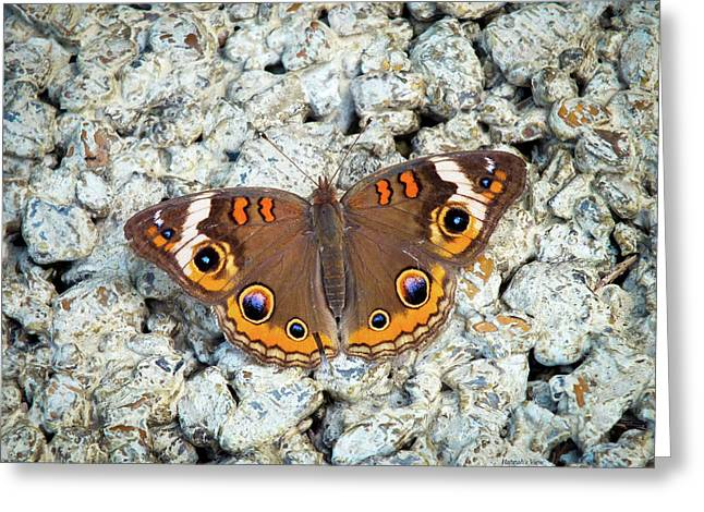 A Common Buckeye Greeting Card