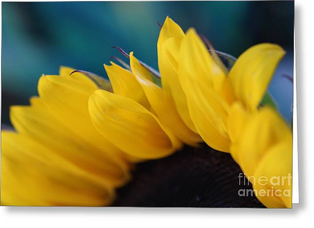A Cool Sunflower Greeting Card