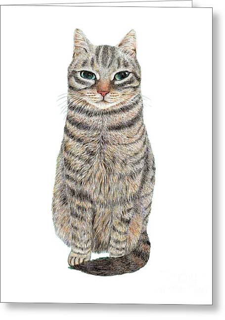 A Cool Tabby Greeting Card
