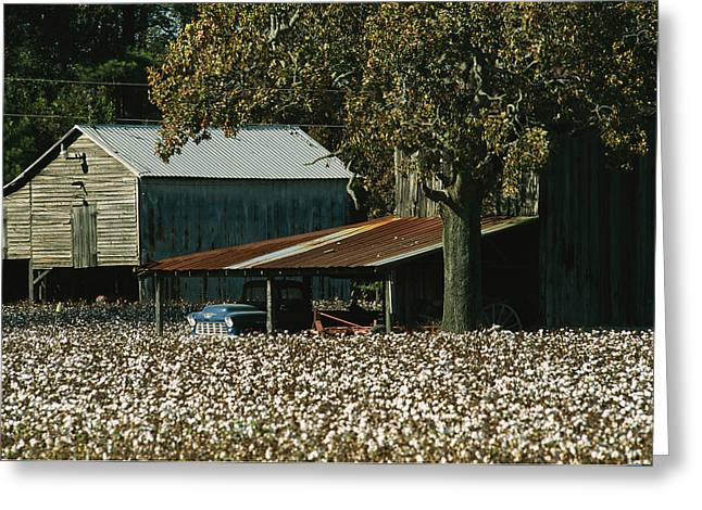 A Cotton Field Surrounds A Small Farm Greeting Card
