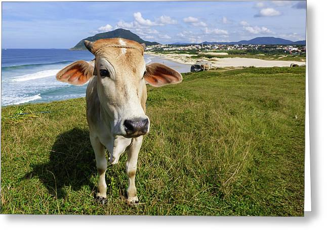 A Cow At The Beach Greeting Card