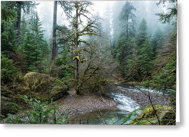Greeting Card featuring the photograph A Creek Runs Through It by Belinda Greb