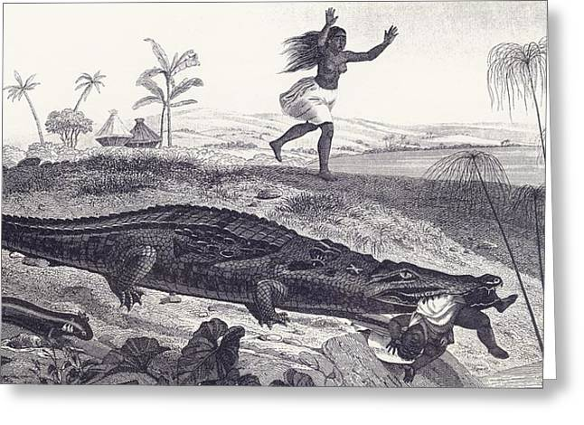 A Crocodile Snatches A Child From An Greeting Card by Vintage Design Pics