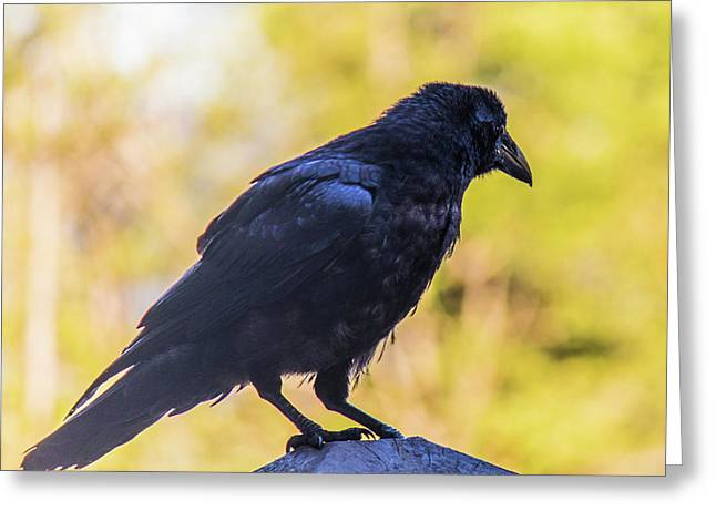 Greeting Card featuring the photograph A Crow Looks Away by Jonny D