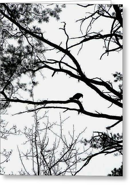 A Crow Shook Down On Me The Dust Of Snow Greeting Card by Fareeha Khawaja