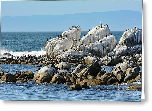 A Crowded Bird Rock Greeting Card
