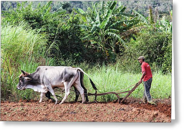 A Cuban Tractor Greeting Card