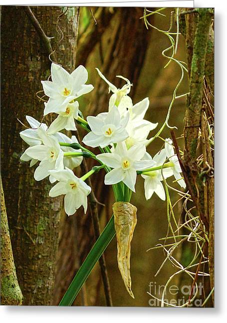 A Cup Full Of Southern Daffodil Beauty  Greeting Card by Kim Pate