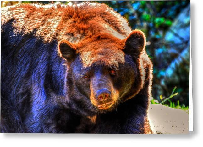 A Curious Black Bear Greeting Card